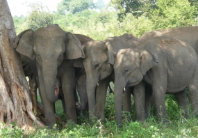 Regulations for Registering and keeping of Tamed Elephants