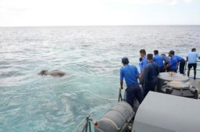 Navy saves 'Jumbo' at sea