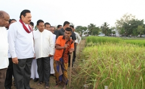 President inspects Kimbulawela Model Paddy Fields