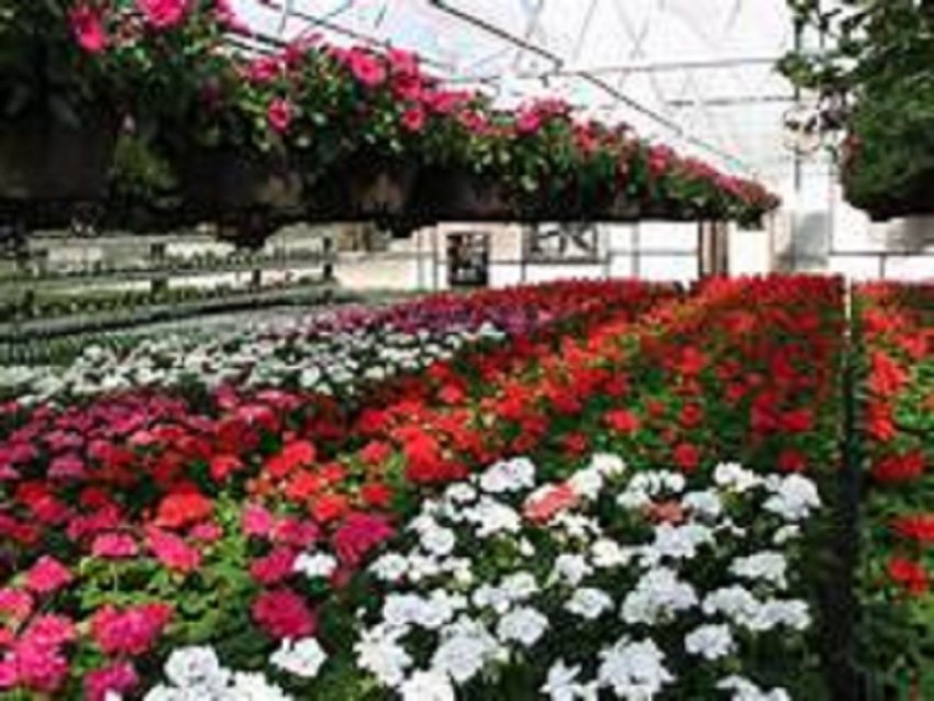 Floriculture products muster over US$ 16 mn in 2017