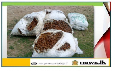 Navy foils smuggling attempt by apprehending suspects with 818kg of dried turmeric
