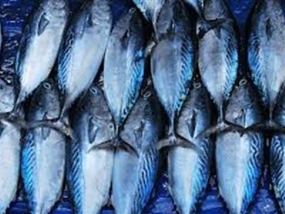 Sri Lanka's Fish Export up by 20% in 2014 1Q